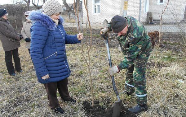 Акция «Посади дерево во имя мира, вечности и жизни» в Вороновском районе